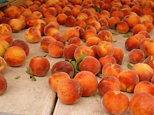 Овощи и фрукты. Польза персиков.
