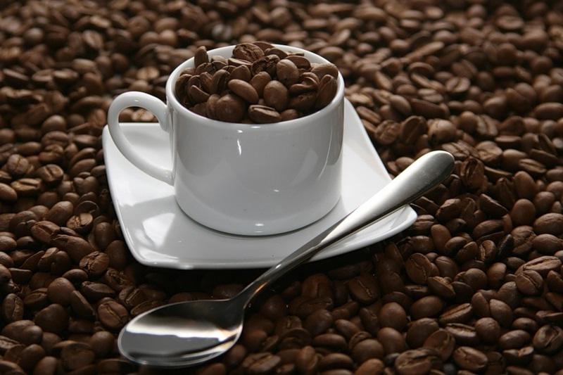 Мир напитков. Кофейное дерево.