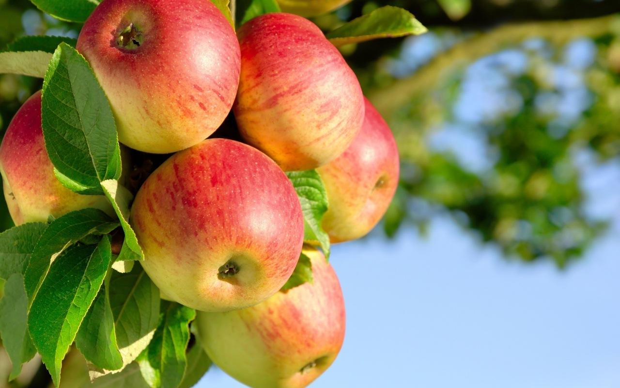 Овощи и фрукты. Сладкие рецепты из яблок.