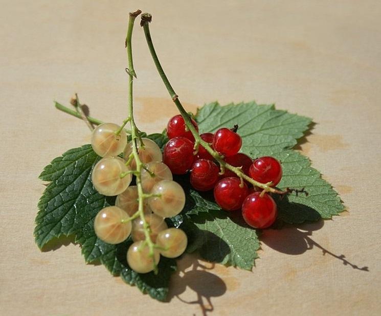 Полезные ягоды. Красная смородина и белая смородина.
