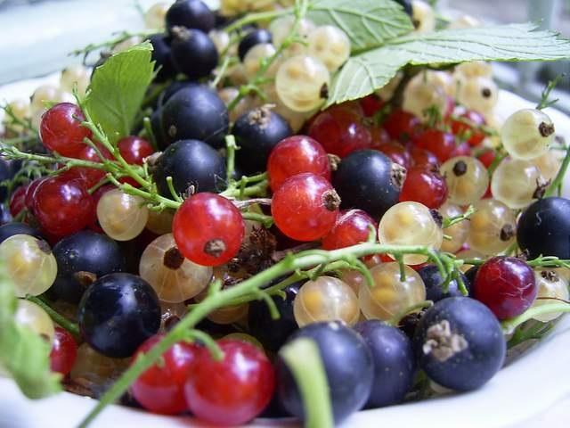 Полезные ягоды. Вкусные рецепты со смородиной.